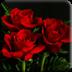 3D玫瑰花壁纸