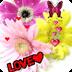 Love Flowers Butterfly Live Wa