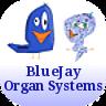 组织学记忆卡:器官