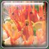 亚洲美味野生虾