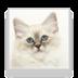 可爱的猫咪墙纸