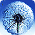 蒲公英S3动态壁纸Water Dandelion LWP