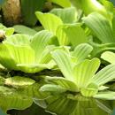 免费水生植物