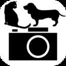 狗,猫摄像头