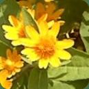 Flower Pedometer