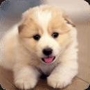 超可爱狗狗主题动态壁纸