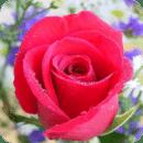 3D玫瑰动态壁紙