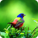 3D鸟的声音