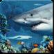 鲨鱼暗礁动态壁纸