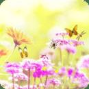 鲜花和蝴蝶