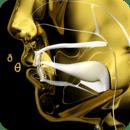 金版音标图谱