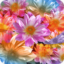 Colorful Lotus
