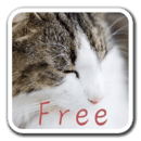 CatWall FREE -LiveWallpaper