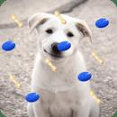 Puppy Live Wallpaper 3