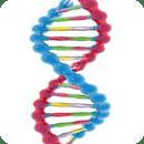 DNA 3d live wallpaper