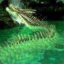 WaterfallDragon-HEALING04Free