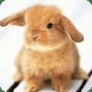 Sweet Bunny Live Wallpaper