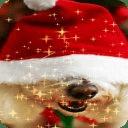 Christmas Dog Live Wallpaper