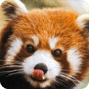 Cute Animal Jigsaw Puzzles