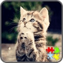 Cats Puzzle Games