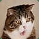 搞怪的猫猫