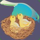 妈妈鸟和她的小鸡