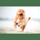 PackRunningDog Live Wallpaper