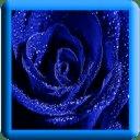 Blue Rose LWP