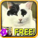Positive Cat Slots - Free