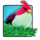 Natural Angry birds free