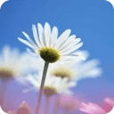 Beautiful Flowers Wallpaper 2