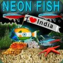 冒泡霓虹灯印度鱼高清