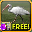 Ibis Slots - Free