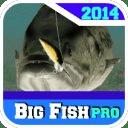 big fish 2014pro