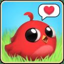 Piou : Bird Pet 3D