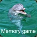 海豚记忆游戏