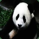 熊猫免费益智