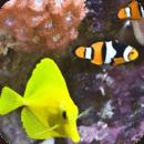 观赏鱼拼图