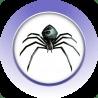 蜘蛛的乐趣