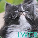 小猫LWP