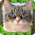 流浪猫模拟3D