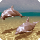 Dolphins Under Sea Live Wallpa