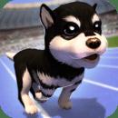 可爱的 小狗 - 狗 运动 - Cute Dog