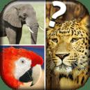 测验关于动物