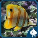 海洋鱼类拼图游戏