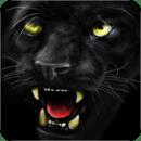 凶猛的黑豹