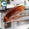 蟑螂昆虫模拟器