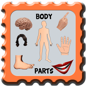our body parts - human body part learning for kids下载
