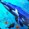 蓝色 鲸 海洋 模拟器