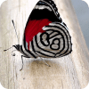 可爱的蝴蝶拼图免费游戏